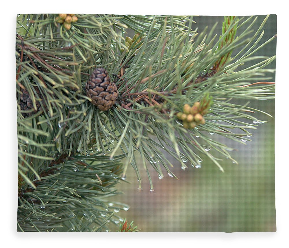 Pine Fleece Blanket featuring the photograph Lodge Pole Pine in the Fog by Frank Madia