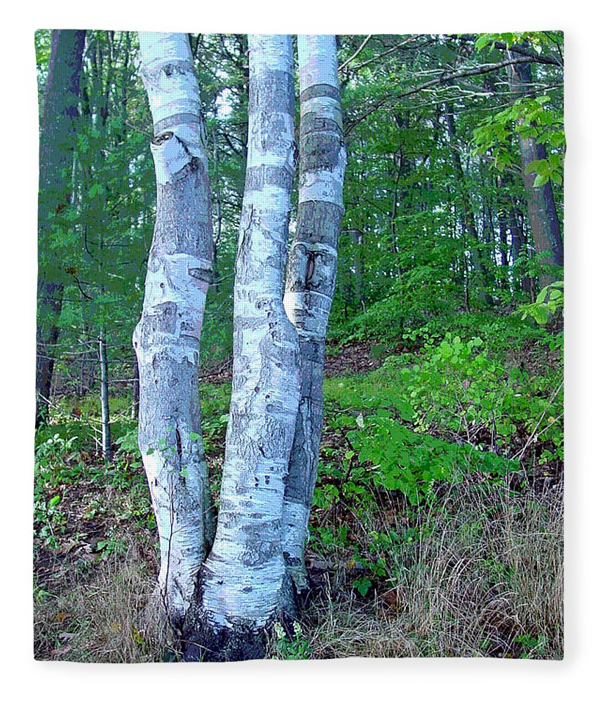 Birch Tree Fleece Blanket featuring the photograph Lone Birch in the Maine Woods by Suzanne Gaff
