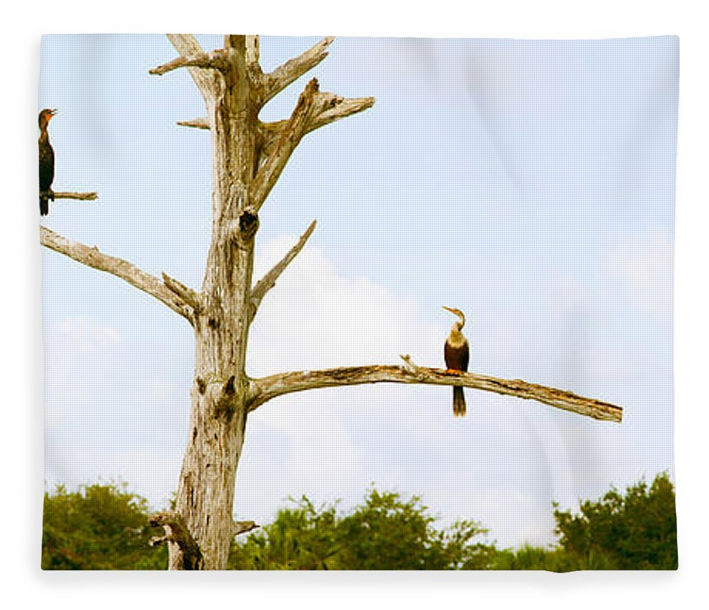Photography Fleece Blanket featuring the photograph Low Angle View Of Cormorants by Panoramic Images