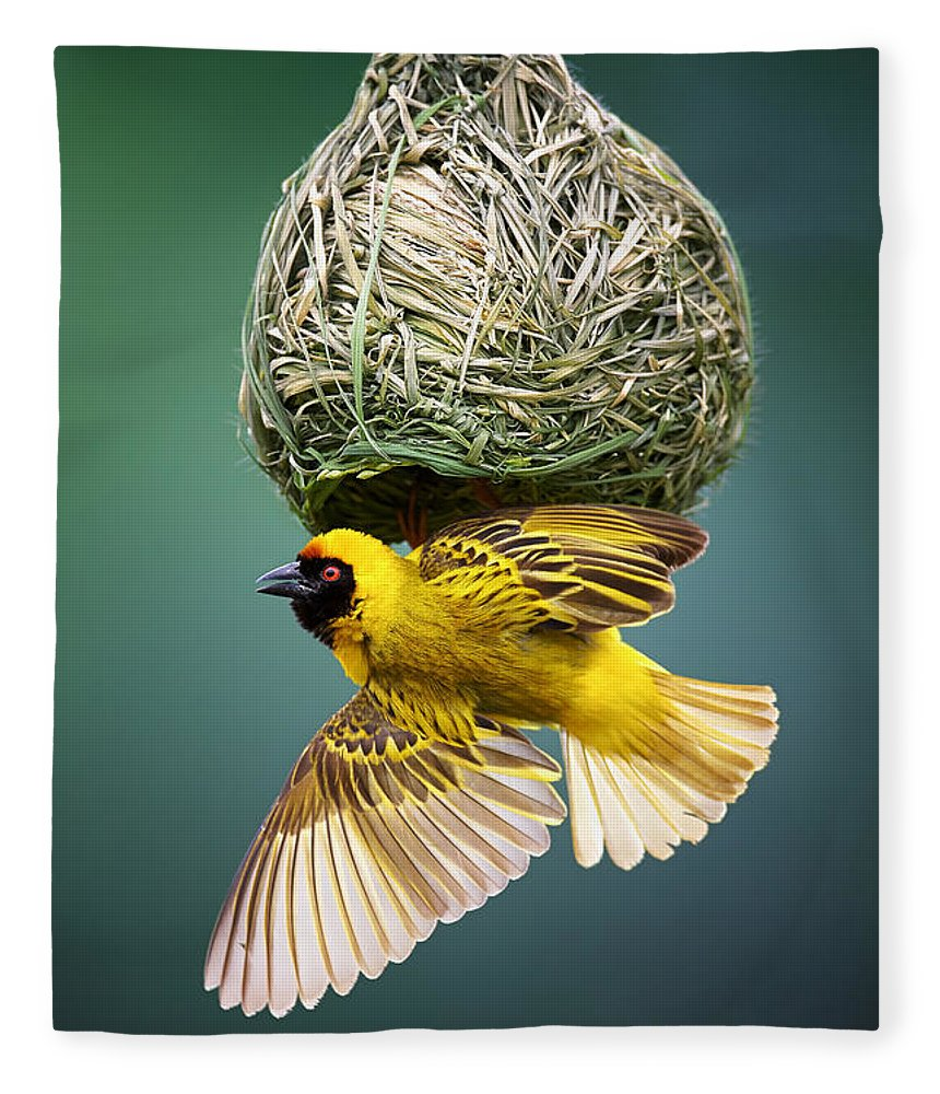 Africa Fleece Blanket featuring the photograph Masked Weaver At Nest by Johan Swanepoel