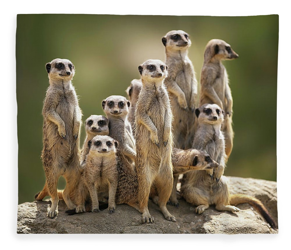 Scenics Fleece Blanket featuring the photograph Meerkat Family On Lookout by Kristianbell