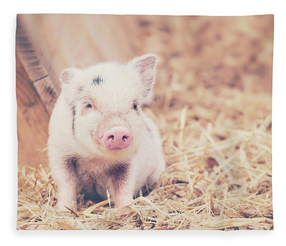 Pig Fleece Blanket featuring the photograph Micro Pig by Samantha Nicol Art Photography