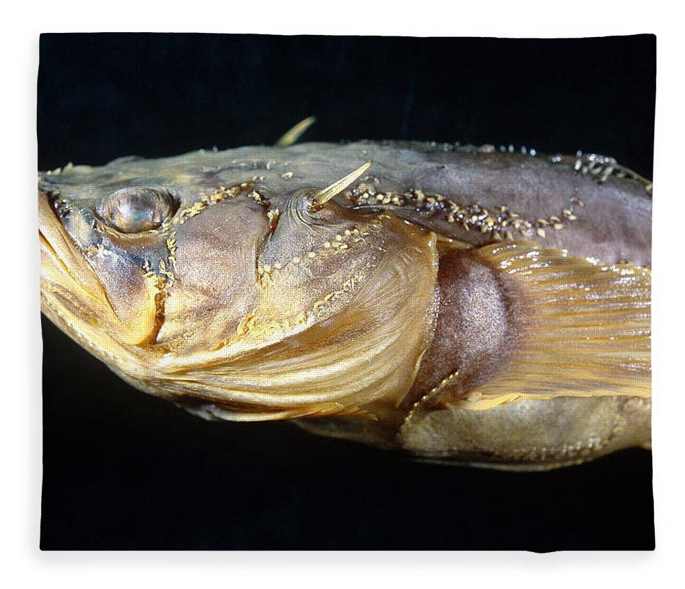 Animal Fleece Blanket featuring the photograph Midshipman by Greg Ochocki