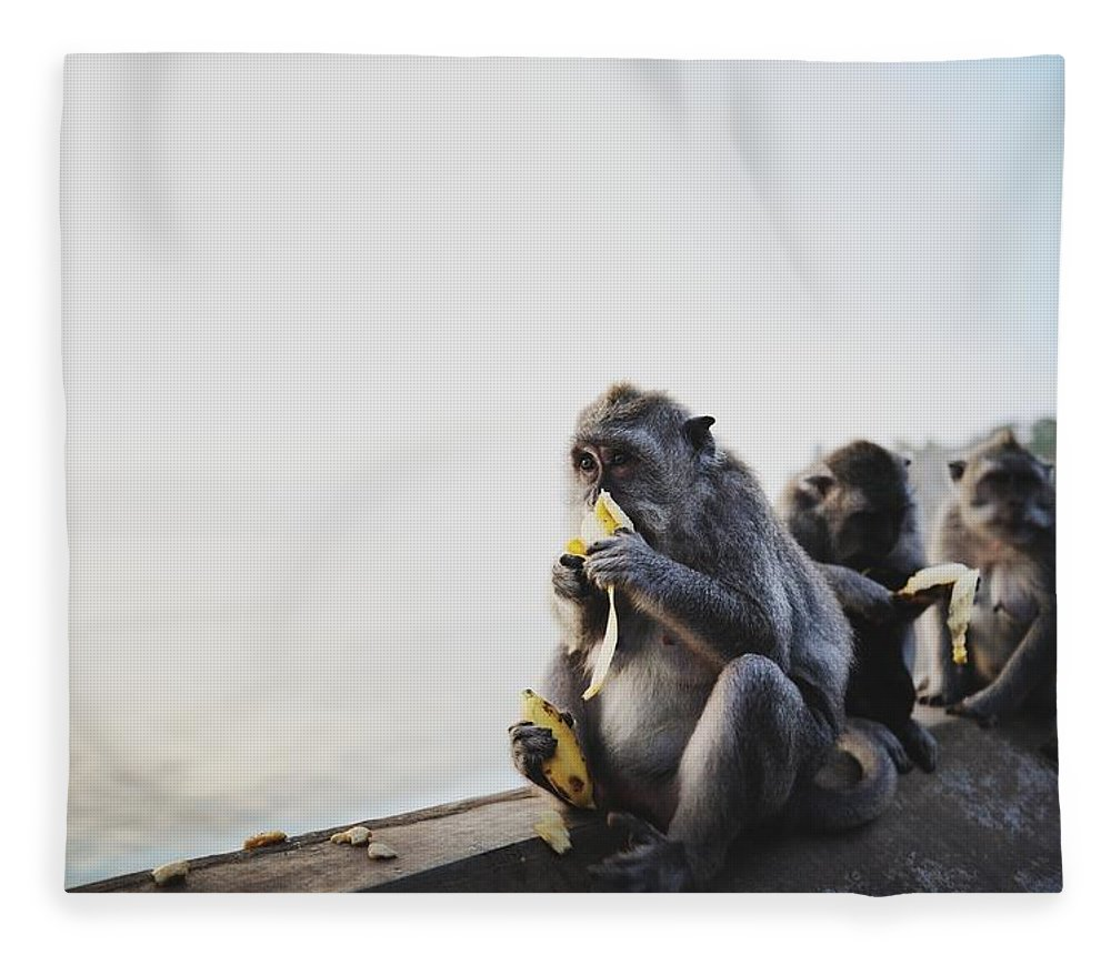 In A Row Fleece Blanket featuring the photograph Monkeys Eating Bananas by Carlina Teteris