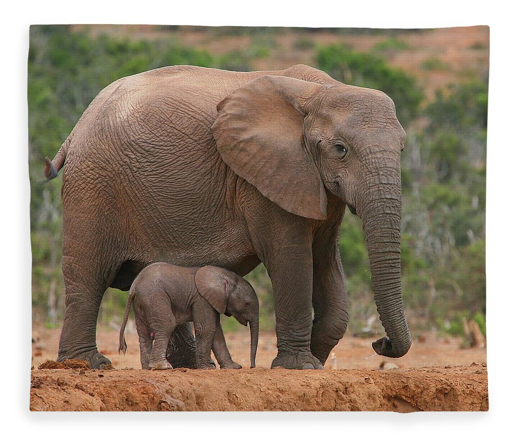 Elephant Fleece Blanket featuring the photograph Mother And Calf by Bruce J Robinson