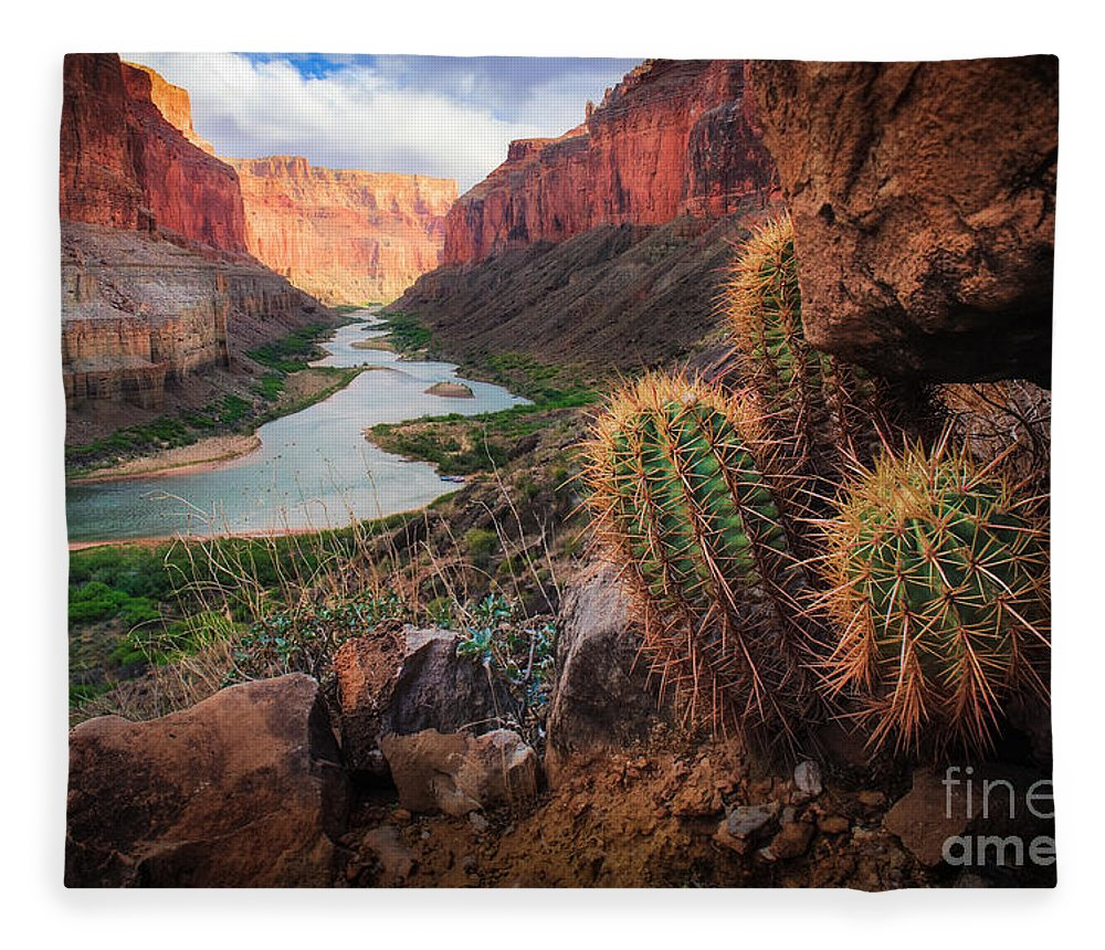 America Fleece Blanket featuring the photograph Nankoweap Cactus by Inge Johnsson