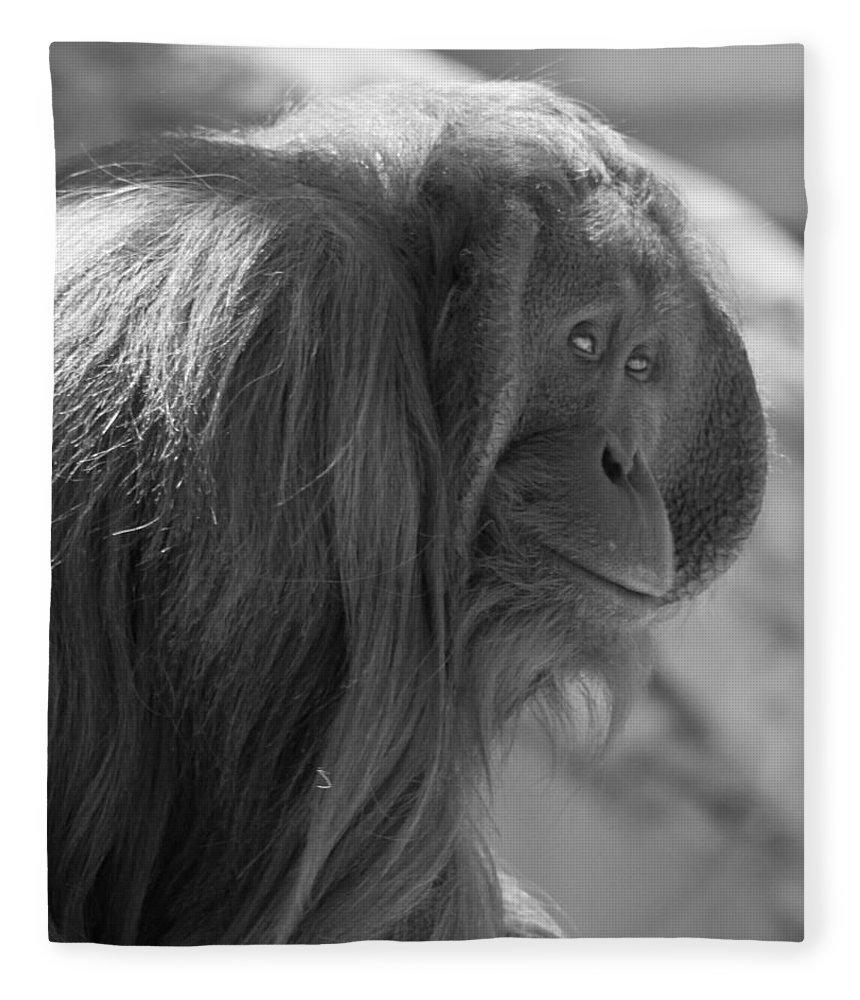 Orangutan Black And White Fleece Blanket featuring the photograph Orangutan Black And White by Dan Sproul