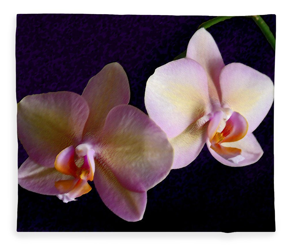 Orchid Fleece Blanket featuring the photograph Orchid Light by Steve Karol