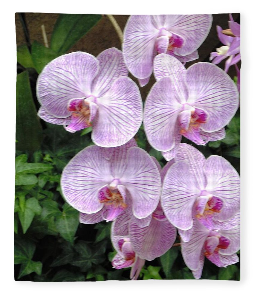 Floral Fleece Blanket featuring the photograph Orchid Splendor by Karin Dawn Kelshall- Best
