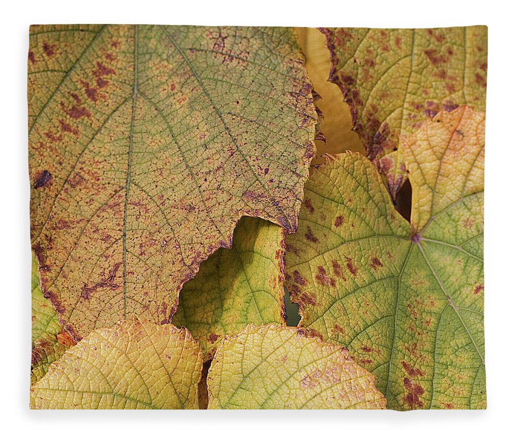 Coin Fleece Blanket featuring the photograph Ornamental Vine by Kim Haddon Photography