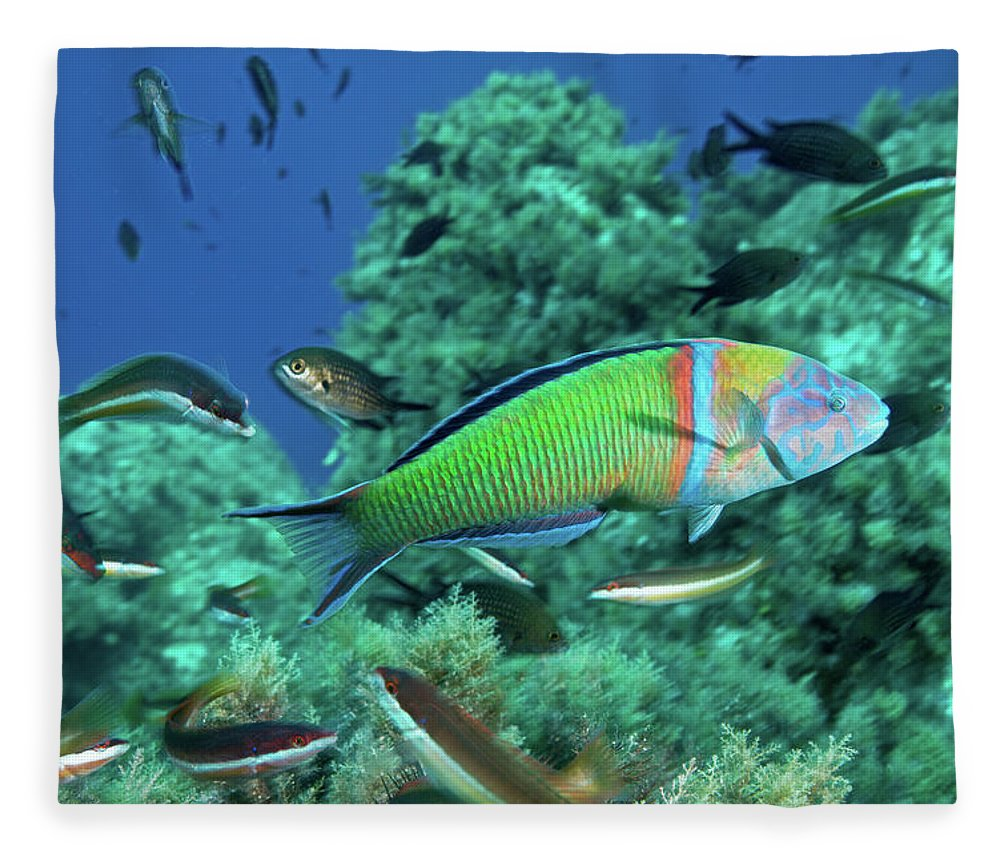 Underwater Fleece Blanket featuring the photograph Ornate Wrasse by Gerard Soury