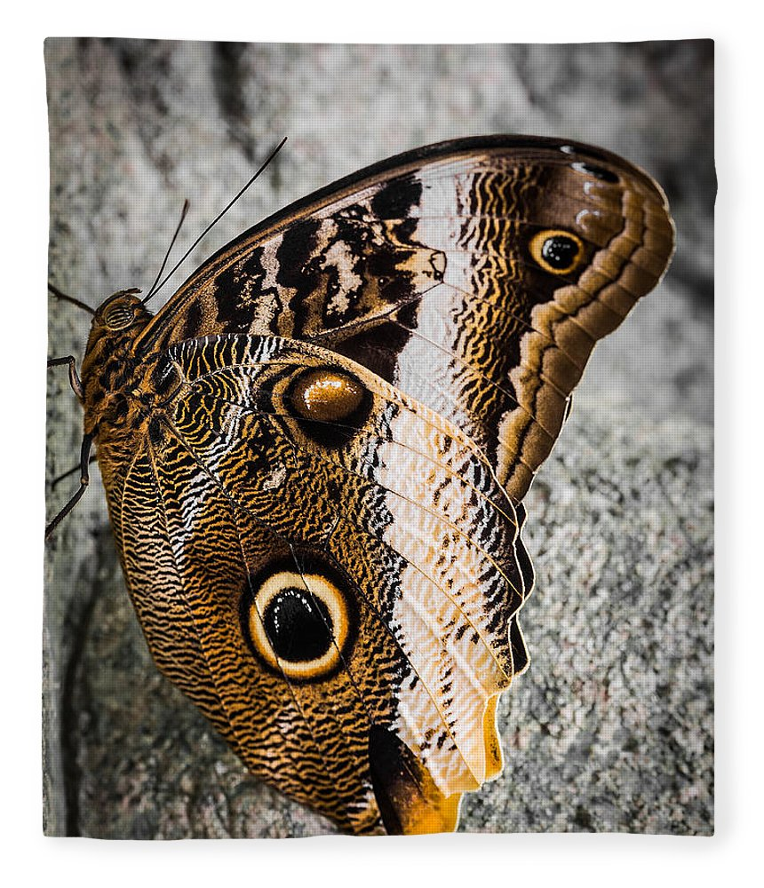 Owl Butterfly Fleece Blanket featuring the photograph Owl Butterfly by Dale Kincaid