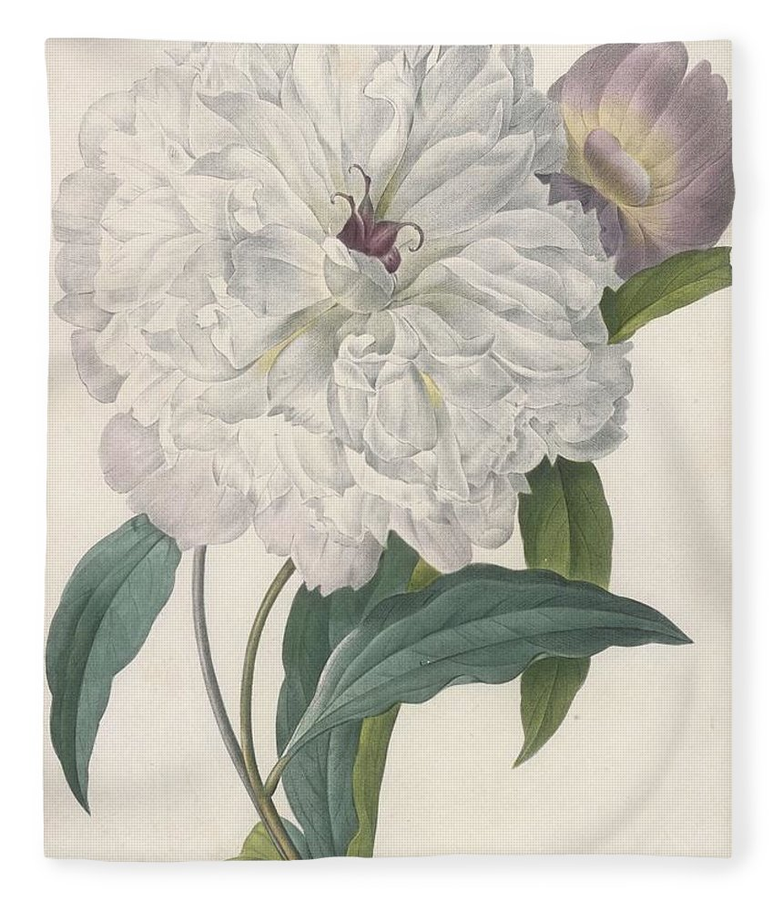 Redoute Fleece Blanket featuring the painting Paeonia Flagrans Peony by Pierre Joseph Redoute