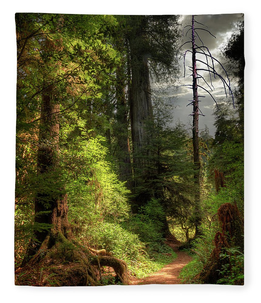 Tranquility Fleece Blanket featuring the photograph Path Through Redwood Forest by Ed Freeman