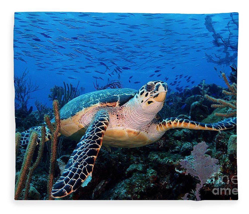 Turtle Fleece Blanket featuring the photograph Pepe On Eldorado by Carey Chen
