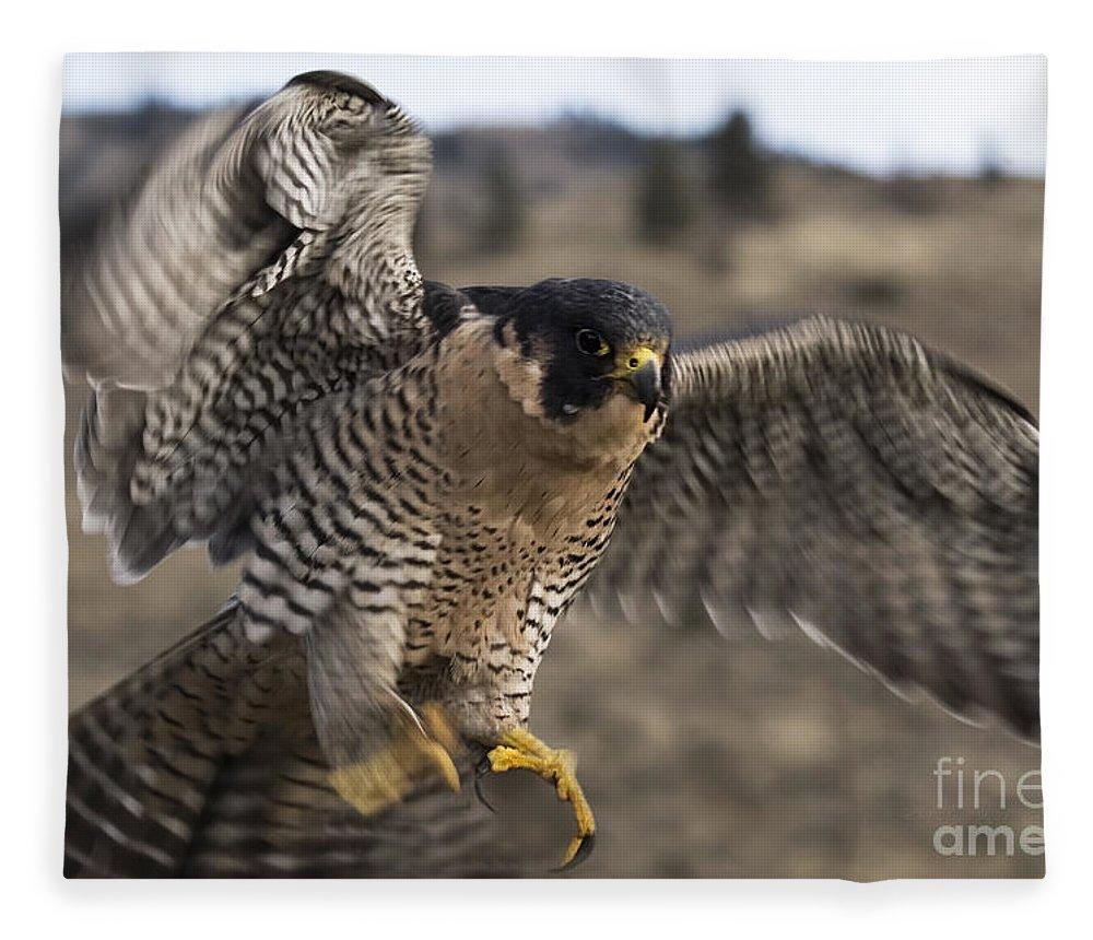 Falcon Fleece Blanket featuring the photograph Peregrine Falcon by Wildlife Fine Art