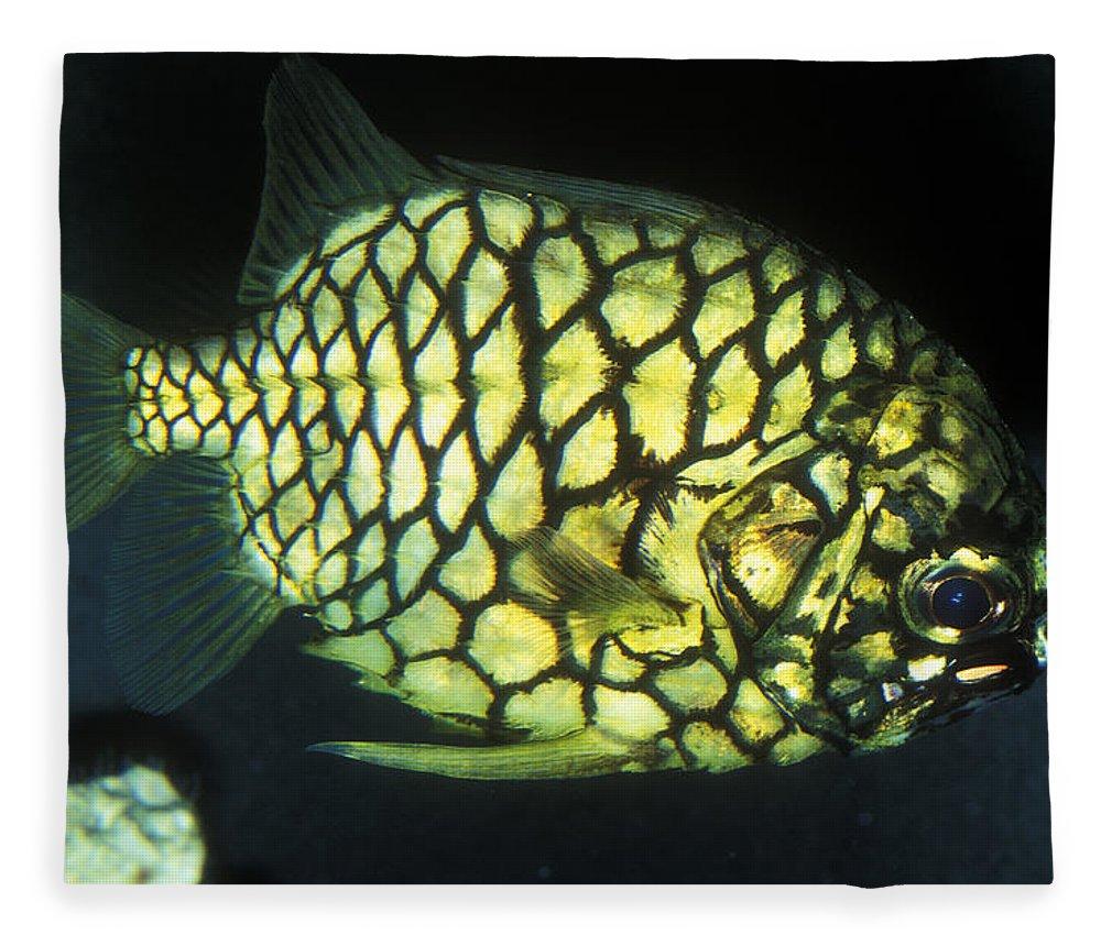Australian Fish Fleece Blanket featuring the photograph Pineapple Fish by Greg Ochocki