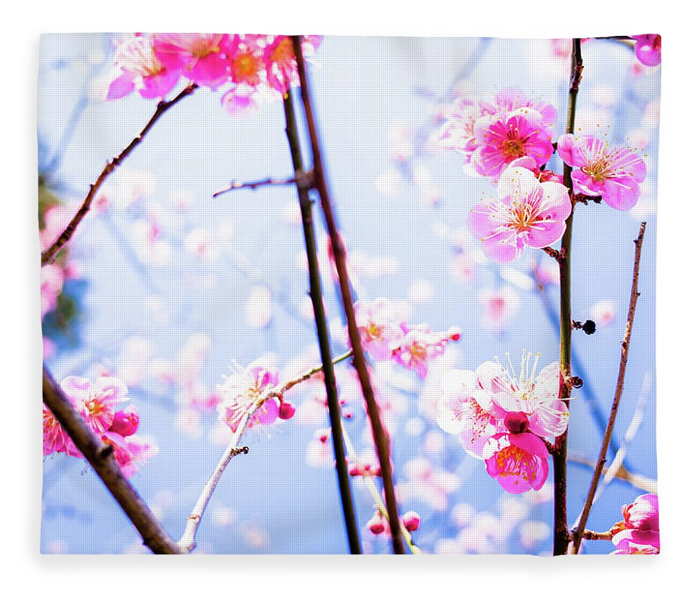 Plum Fleece Blanket featuring the photograph Plum Blossoms In Bloom by Marser