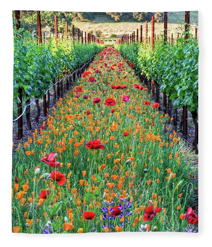 Tranquility Fleece Blanket featuring the photograph Poppy Lined Vineyard by Rmb Images / Photography By Robert Bowman