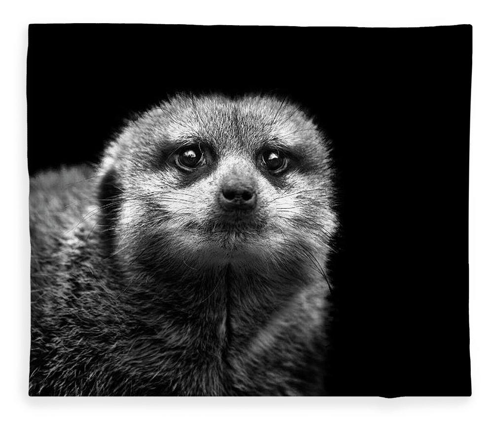Alertness Fleece Blanket featuring the photograph Portrait Of Meerkat by Malcolm Macgregor
