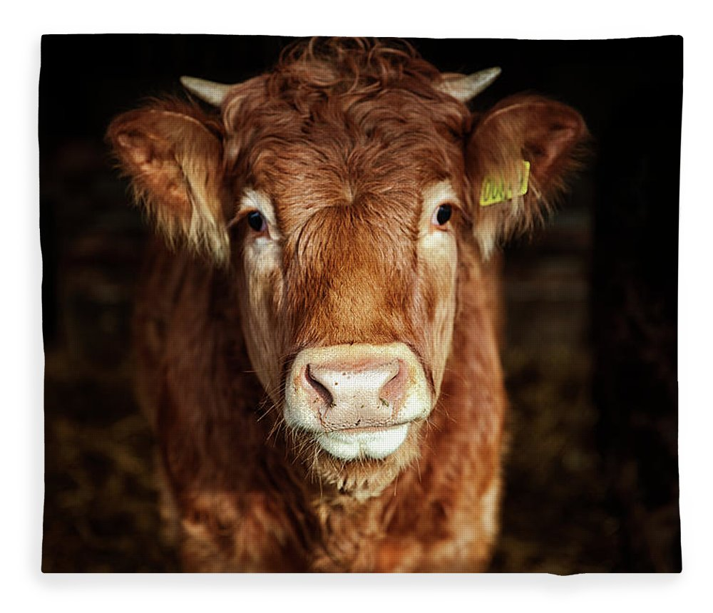 Domestic Animals Fleece Blanket featuring the photograph Portrait Of Young Cow by T-lorien