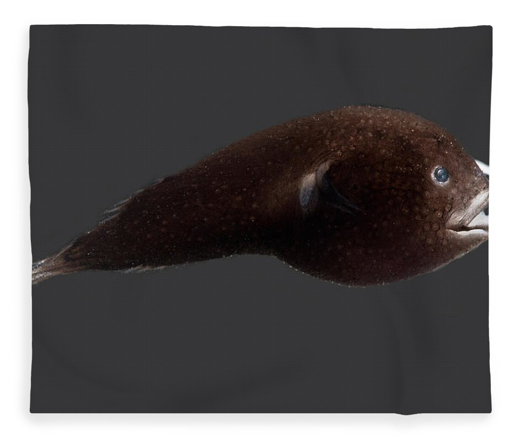 Prickly Dreamer Fleece Blanket featuring the photograph Prickly Dreamer Anglerfish by Dant� Fenolio