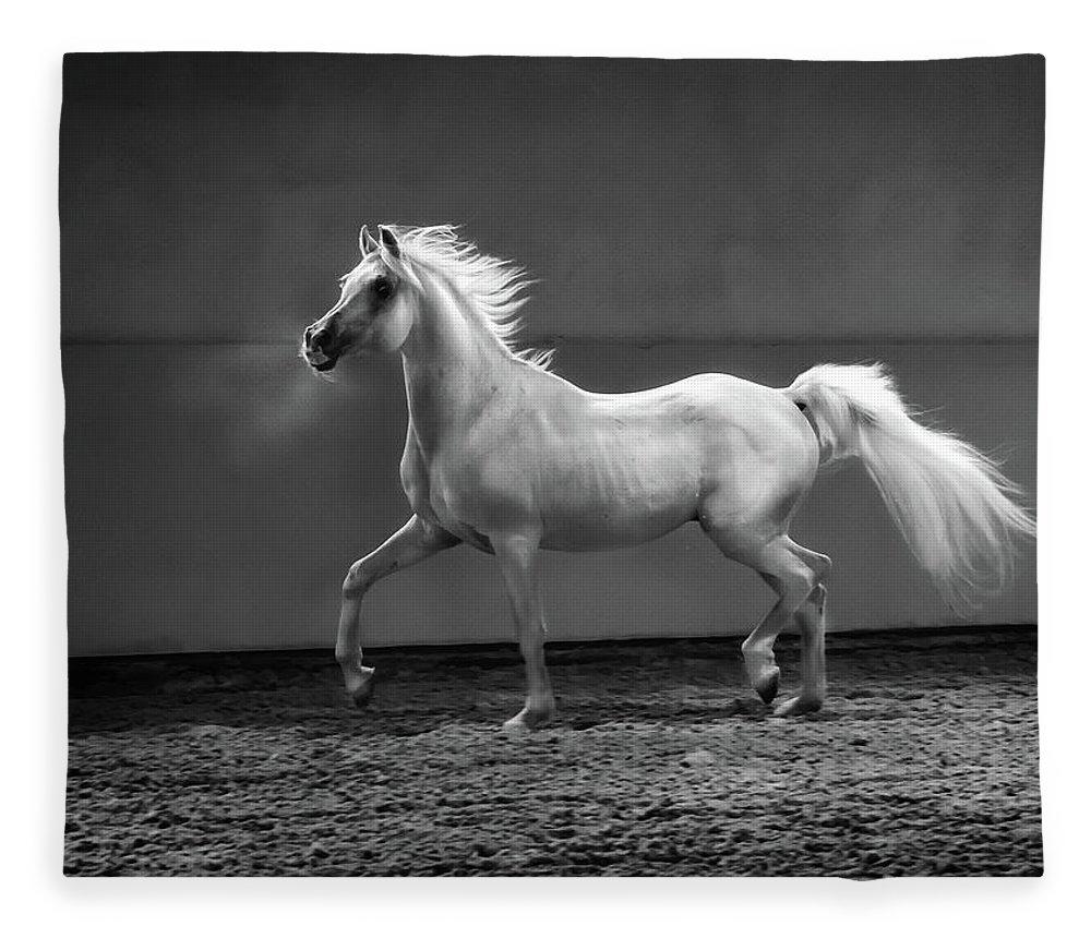 Horse Fleece Blanket featuring the photograph Proud Arabian Horse - Stallion In by Kerrick