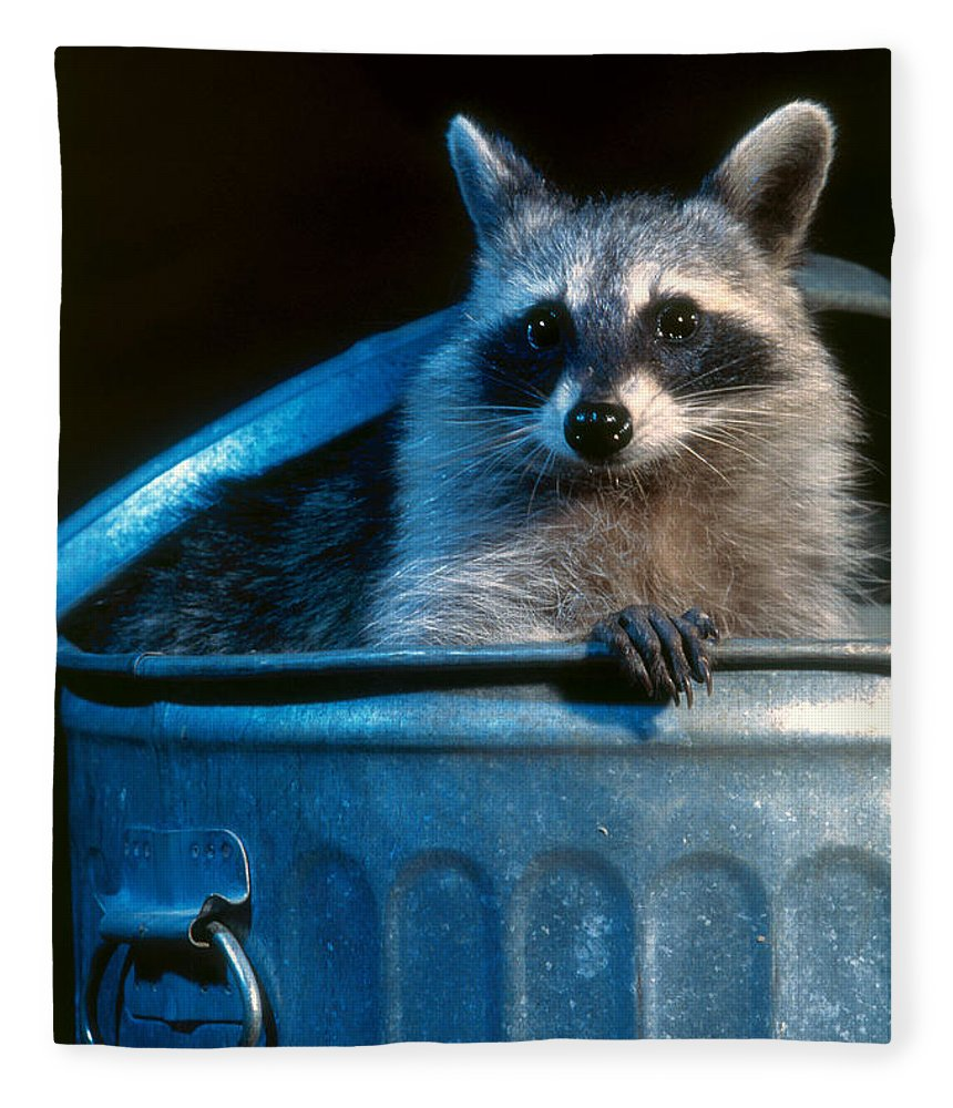 Raccoon Fleece Blanket featuring the photograph Raccoon In Garbage Can by Steve Maslowski