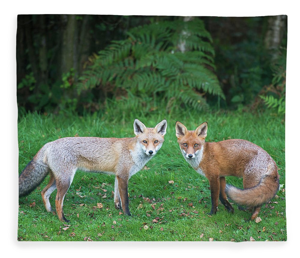 Animal Themes Fleece Blanket featuring the photograph Red Foxes At Edge Of Forest by James Warwick