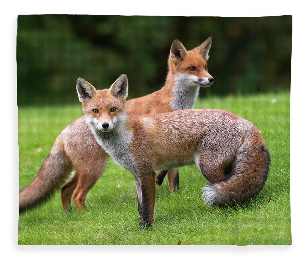 Conspiracy Fleece Blanket featuring the photograph Red Foxes by James Warwick
