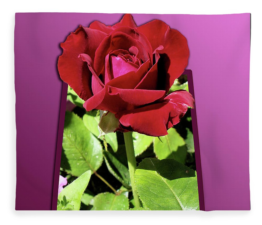 Red Rose Fleece Blanket featuring the photograph Red Rose by Thomas Woolworth