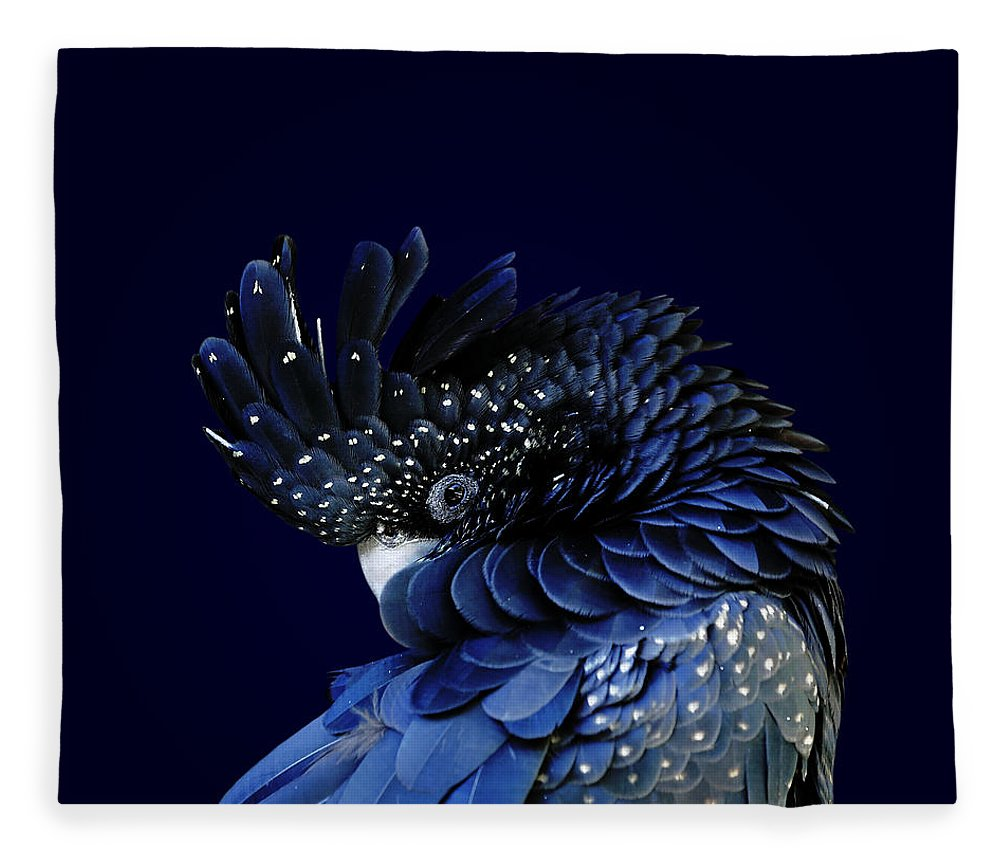 Fort Worth Fleece Blanket featuring the photograph Red-tailed Black Cockatoo by © Debi Dalio