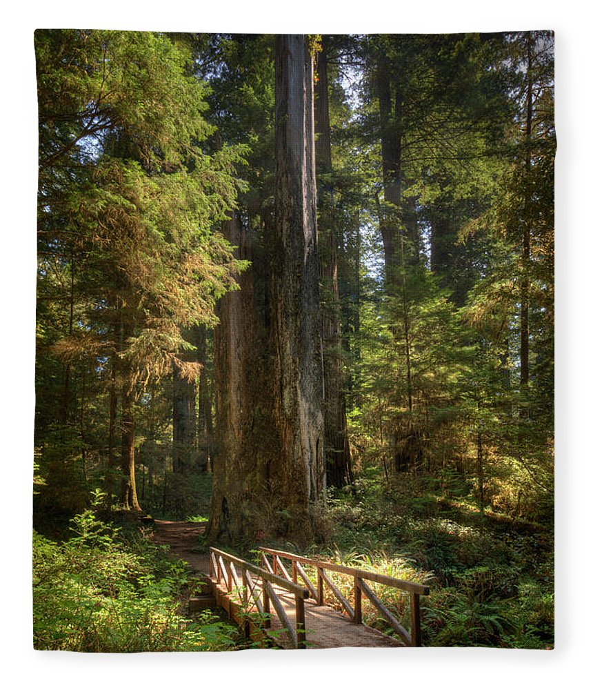 California Fleece Blanket featuring the photograph Redwood Forest On A Perfect Spring Day by Ed Freeman