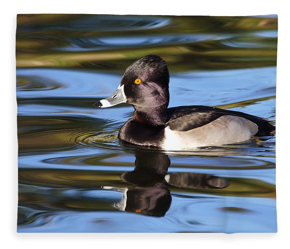 Ring-necked Duck Fleece Blanket featuring the photograph Rings around Ring-necked Duck by Andrew McInnes