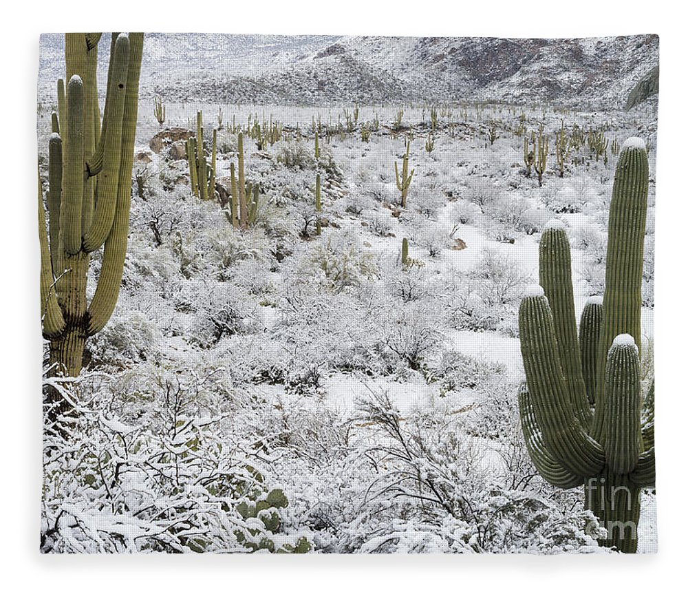 Nature Fleece Blanket featuring the photograph Saguaro Cacti After Rare Desert by John Shaw