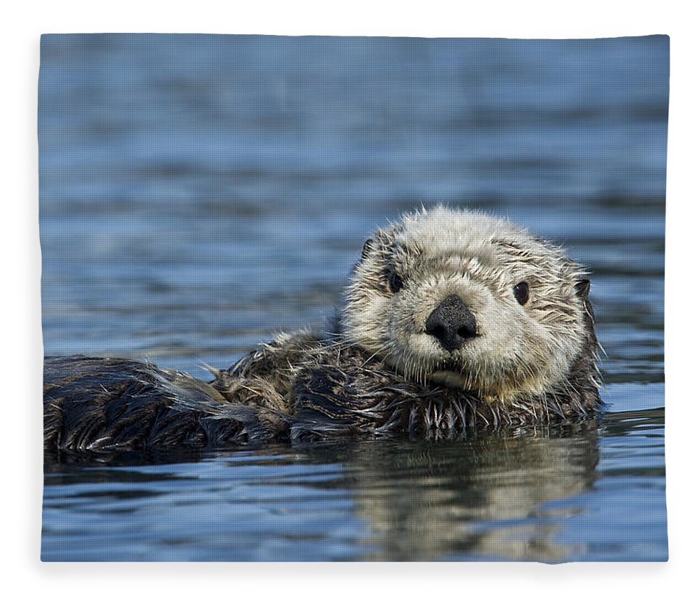 Michael Quinton Fleece Blanket featuring the photograph Sea Otter Alaska by Michael Quinton
