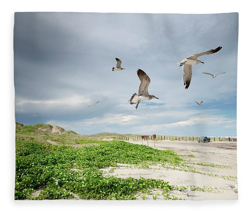 Scenics Fleece Blanket featuring the photograph Seagulls In Flight At North Padre by Olga Melhiser Photography