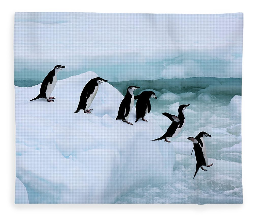 Iceberg Fleece Blanket featuring the photograph Seven Chinstrap Penuins Queueing by Rosemary Calvert