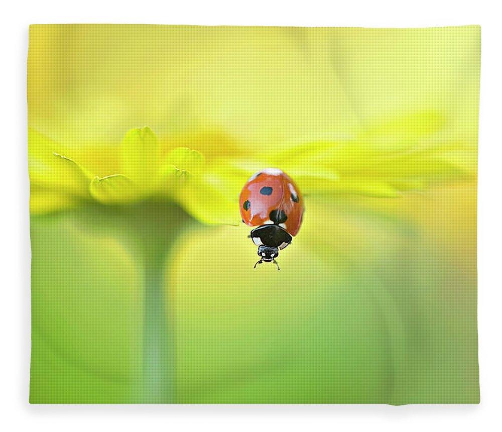 Buckinghamshire Fleece Blanket featuring the photograph Seven Spot Ladybird On Yellow Flower by Jacky Parker Photography
