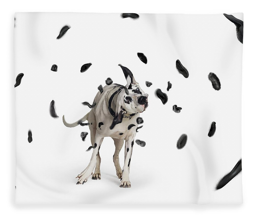 Pets Fleece Blanket featuring the photograph Shake The Spots Off by Gandee Vasan