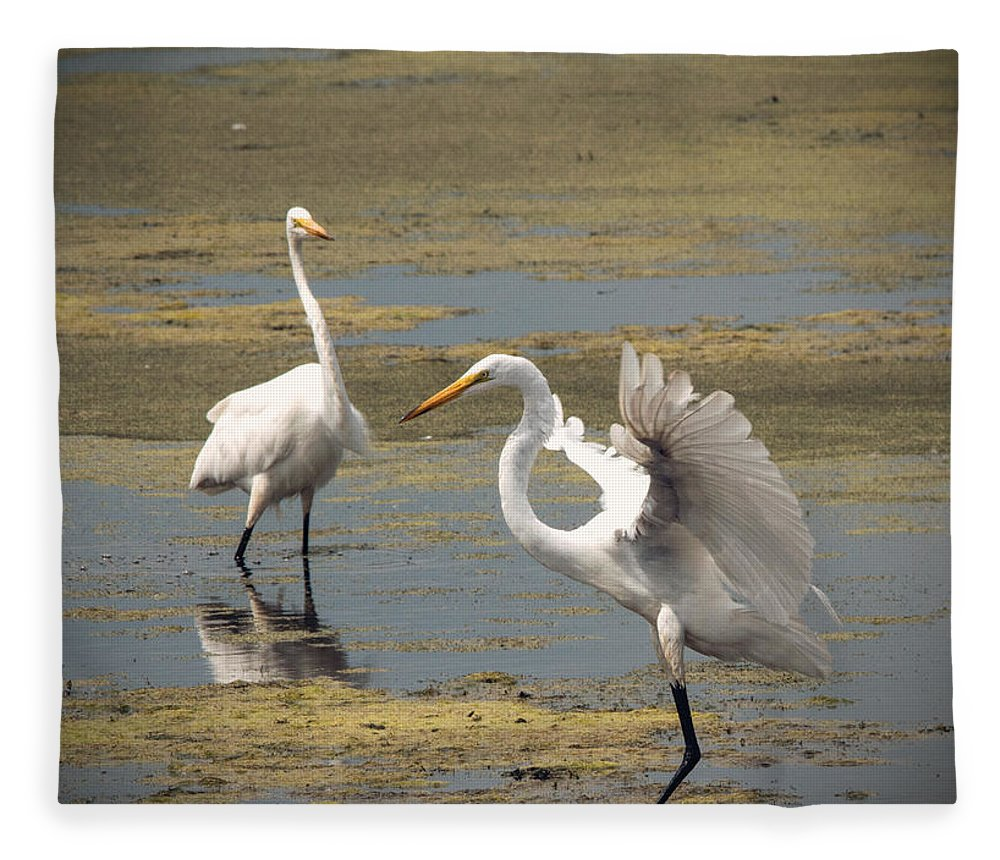Great Egret Fleece Blanket featuring the photograph Showoff by Jayne Gohr