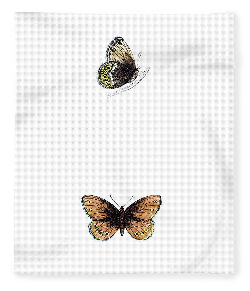 Engraving Fleece Blanket featuring the photograph Silver Bordered Ringlet - Hand Coloured by Andrew howe
