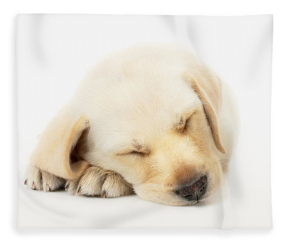 Adorable Fleece Blanket featuring the photograph Sleeping Labrador Puppy by Johan Swanepoel