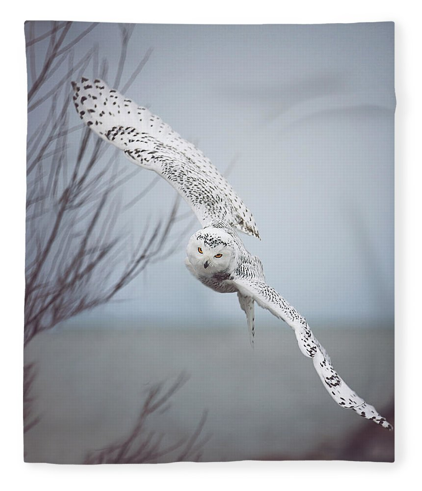 Wildlife Fleece Blanket featuring the photograph Snowy Owl In Flight by Carrie Ann Grippo-Pike