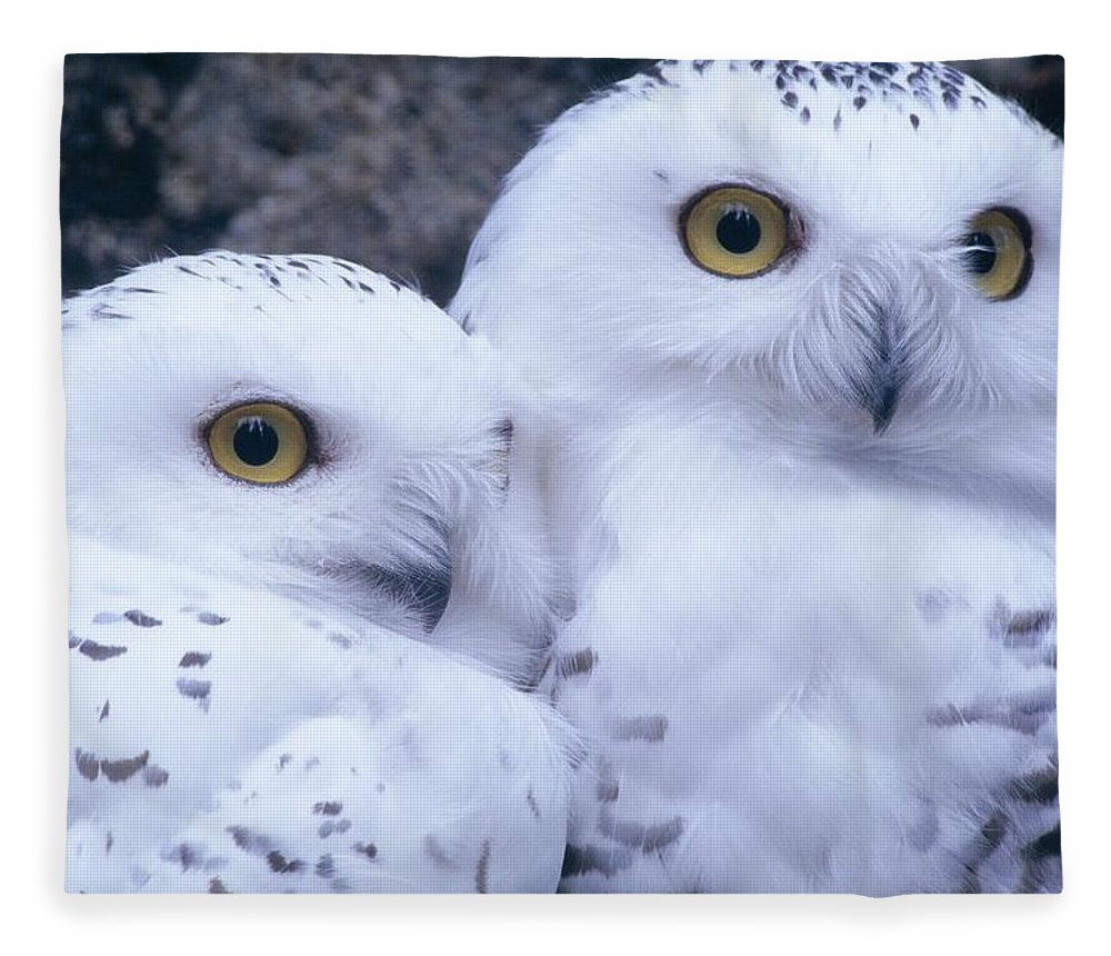 Snowy Owls Fleece Blanket featuring the photograph Snowy Owls by Paal Hermansen