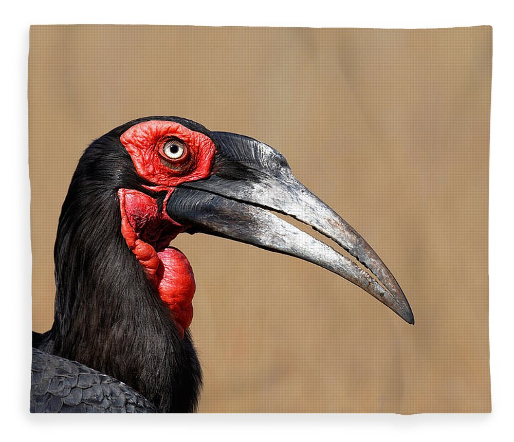 Southern Fleece Blanket featuring the photograph Southern Ground Hornbill Portrait Side View by Johan Swanepoel