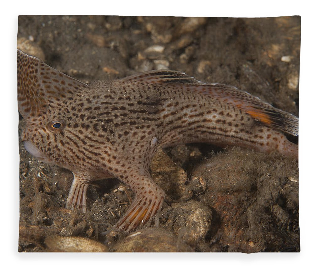 Spotted Handfish Fleece Blanket featuring the photograph Spotted Handfish by Richard Smith