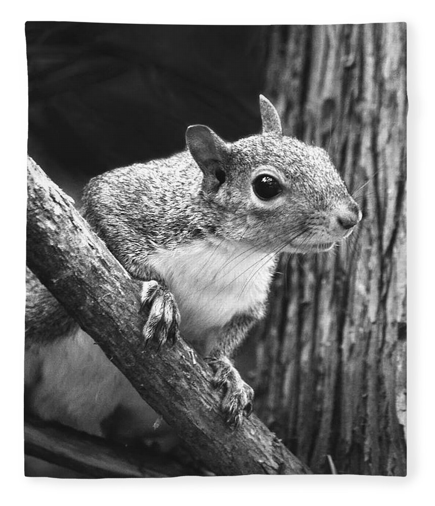 Eastern Squirrel Fleece Blanket featuring the photograph Squirrel Black And White by Sandi OReilly