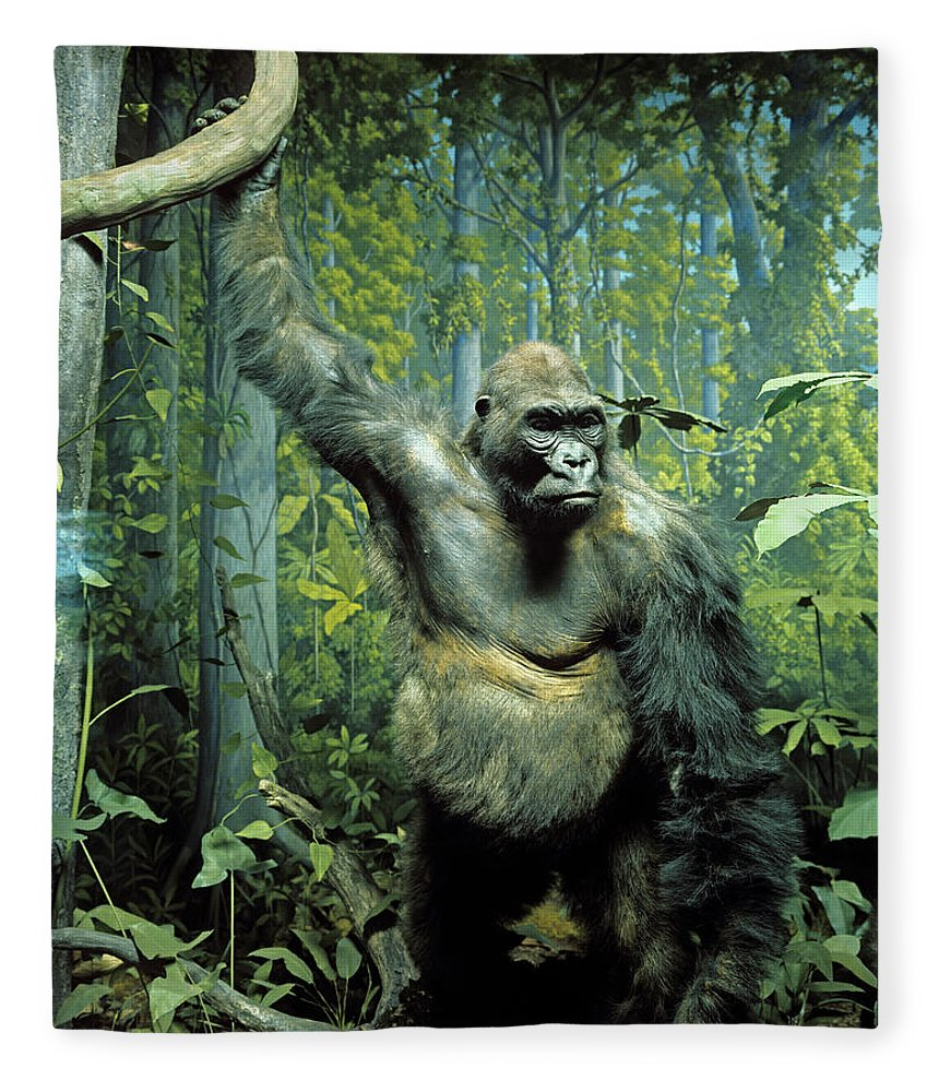 Photography Fleece Blanket featuring the photograph Stuffed Specimen Of Mountain Gorilla by Animal Images