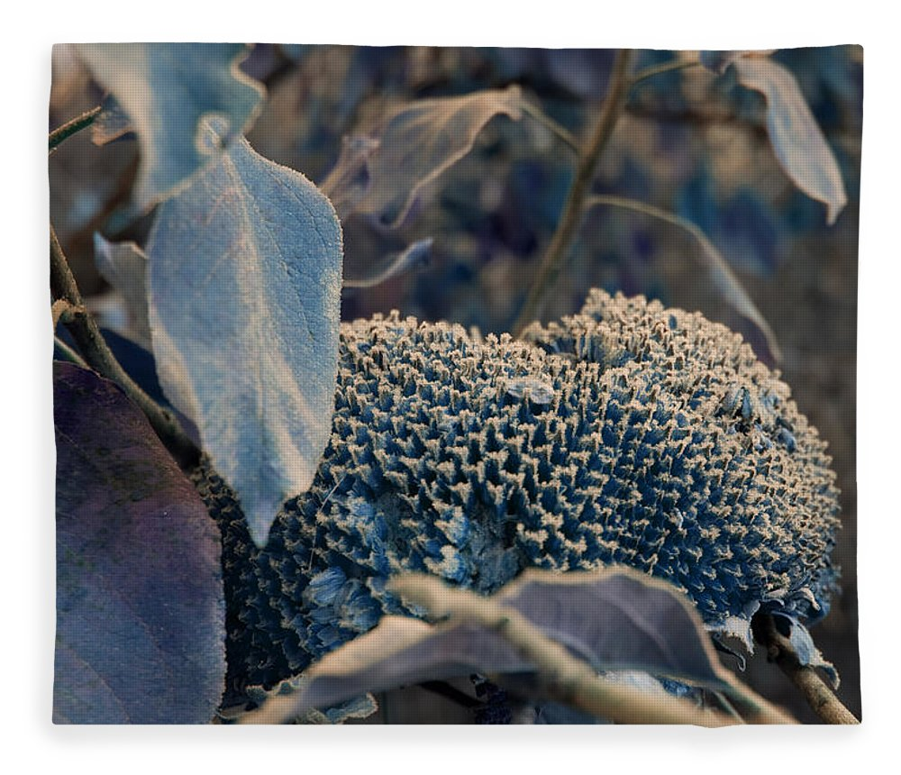 Sunflower Fleece Blanket featuring the photograph Sunflower Seeds and Apple Leaves by Jo Smoley